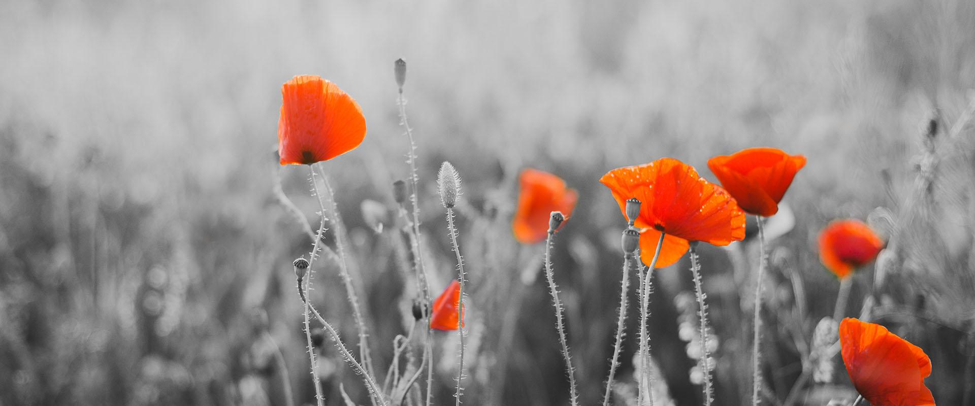 Armistice Day 2019 and 2020 - PublicHolidays.fr
